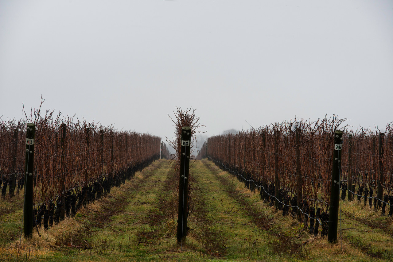 One of the many vineyards on the North Fork of Eastern Long Island.
