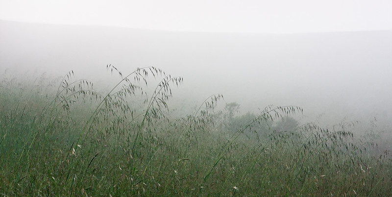 On the hike back there was an eerie silence as the sun was setting and the fog slowly descended upon the grasslands.
