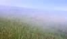 A view of Borel Hill through the fog.