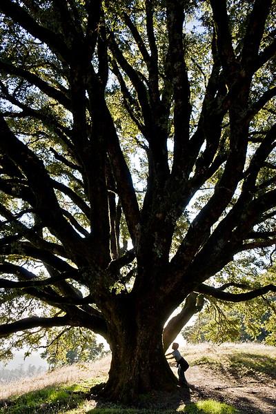 Little boy holding up tree.