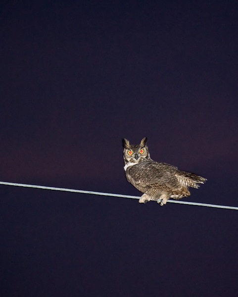 My first owl photo! Shot handheld at ISO 1600.