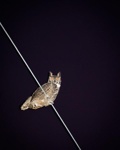 My second owl photo!