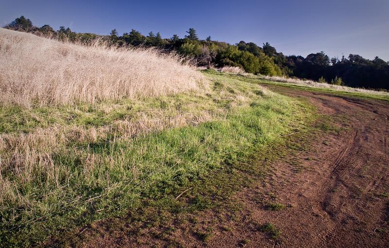 Ancient Oaks Trail.