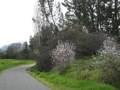 Ruth Bancroft Garden, February 2010