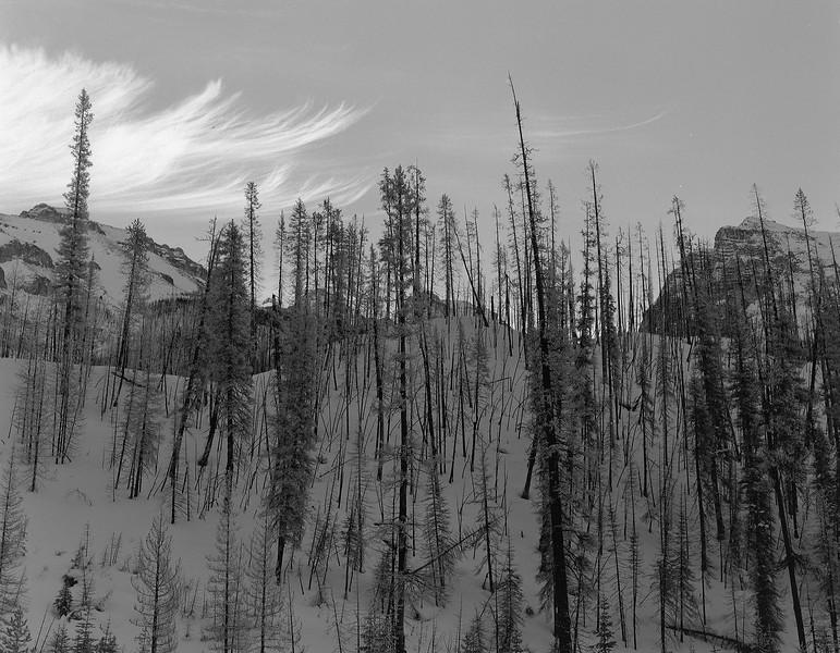 The Burn in Kootenay National Park, near Stanley Glacier