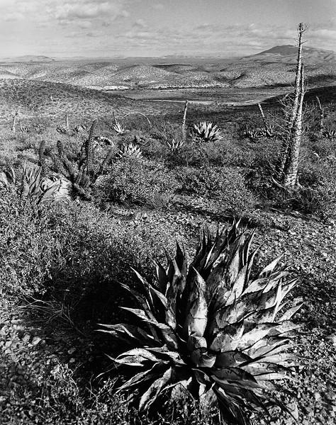 Tequila Sunrise, Baja Mexico
