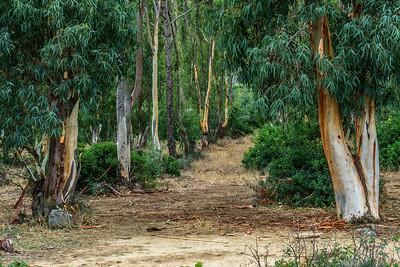 Baumgruppe, Sardinien