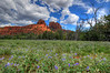 Wildflowers below Cathedral Rock.  On a cloudy afternoon in Sedona, AZ