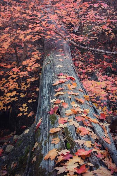 Sedona Fall