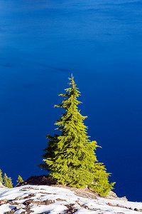 Single Green Pine Tree with snow and beautiful blue water background. Shot at Crater Lake national park in Oregon, USA