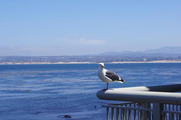 SF Monterey Carmel trip
