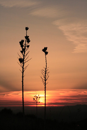 """Yucca sunrise"", near Las Cruces, NM"