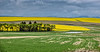 Canola Fields, Camas Praire, Idaho