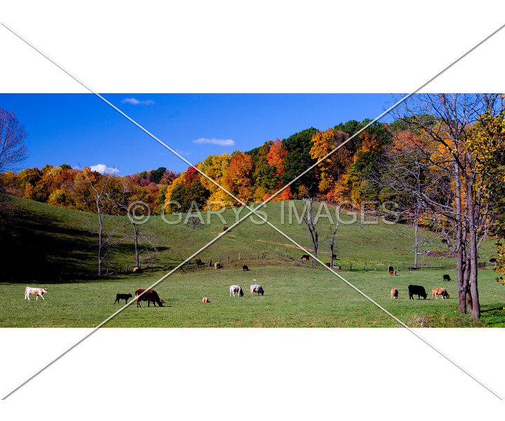 "This photo will print with two white bands at the edges which will need to be removed to get a panoramic print. I croped it this way to enhance the photo. It currently is set to print at 20 x 24"" but can be resized. This is autumn folliage in the hocking hills in 2007."