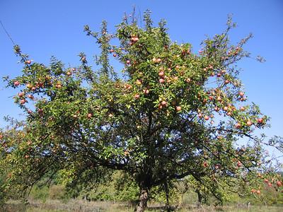 Goed appeljaar