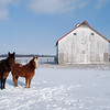 FRUIT ROAD<br /> These horses posed solemnly in the gusty wind with temperatures in the teens. No matter where I moved, they faced straight into the wind. Their farm is at the intersection of Fruit Road and IL Route 4.<br /> <br /> Date: January 7, 2010<br /> Exposure: 1/200<br /> Aperture: f/7.1<br /> ISO: 100<br /> Focal length: 18mm