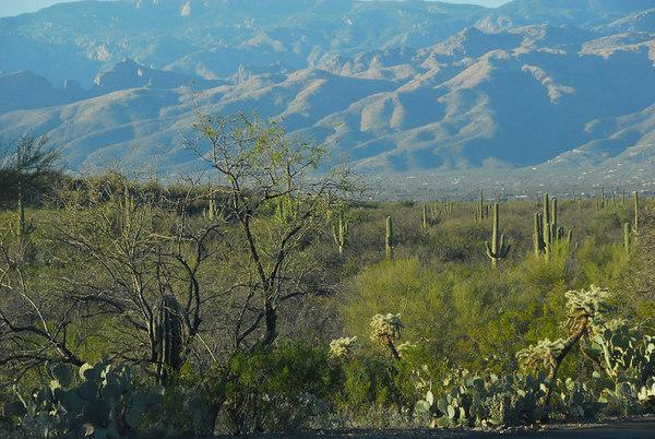 Saguaro National Monument - Tucson