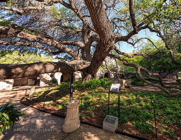The Alamo Gardens: Nikon D600, 16mm Lens, f/7.1, 1/160, and ISO 16mm.