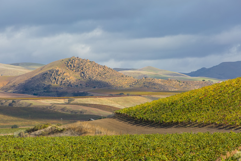 Paicines vineyards