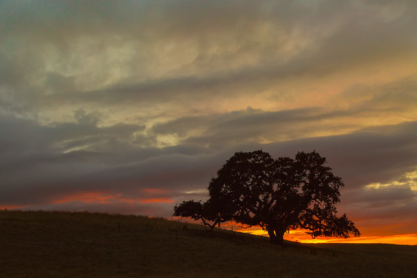 My Favorite Tree At Sunset.