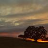 My Favorite Tree At Sunset.
