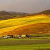 Beautiful lighting on a local ranch. Santa Ana Valley Rd.