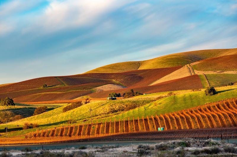 Vineyards in Paicines, CA.