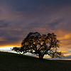 My favorite tree for sunsets.
