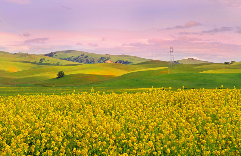 Spring In San Benito County