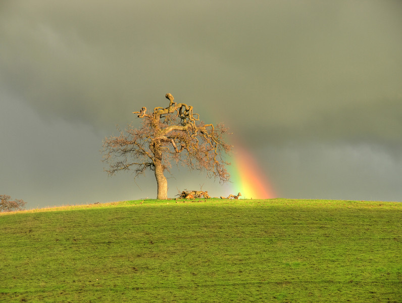 A Tree With Attitude.