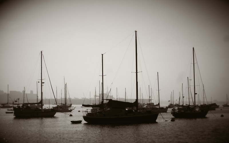 """Cruisers in San Diego Harbour""<br /> Sailboats at anchorage in the harbour at San Diego.  Mini. Image # BD21"