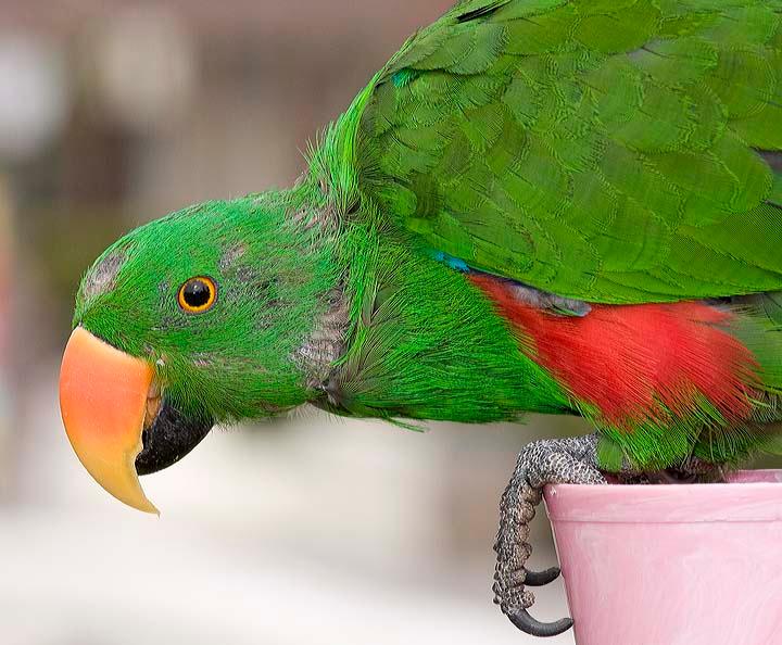 San Diego Parrot Rescue