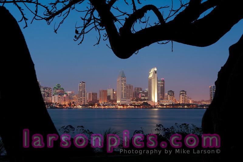 San Diego Skyline Framed by Tree