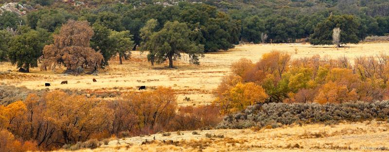 Pine Valley in November