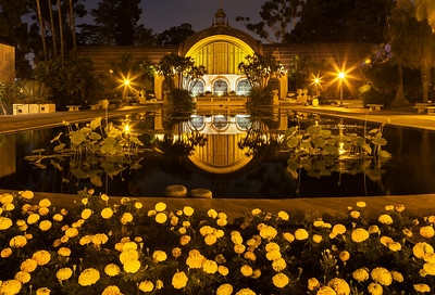 Balboa Park Botanical Garden in the reflecting pool.