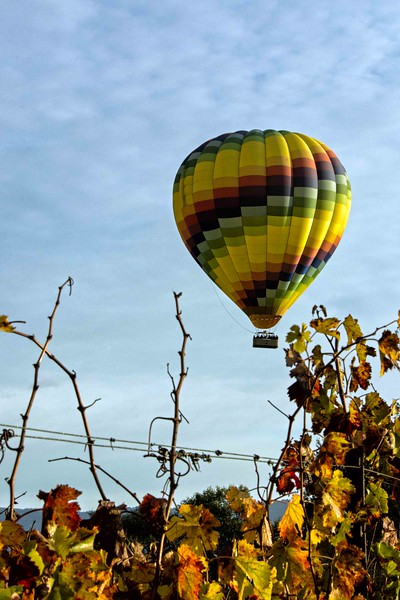 Hot Air Balloon, Napa valley