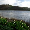 Rodeo Beach Lagoon with Calla Lillies