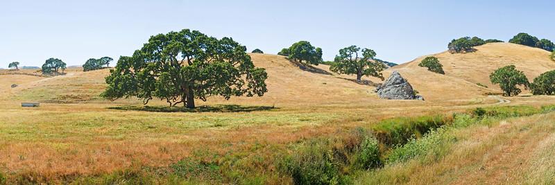29) Petaluma Pasture 200906211604