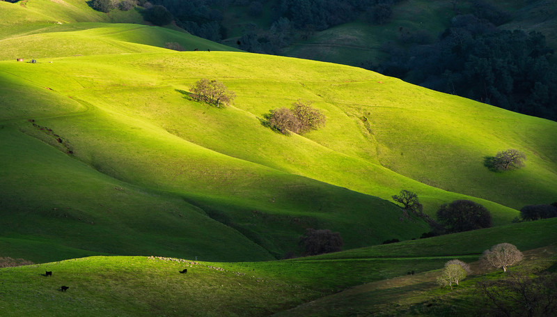 """Rolling Hills of Mount Diablo"""