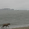 Alcatraz, Sailboats & Dog, Crissy Field, San Francisco, June 2008