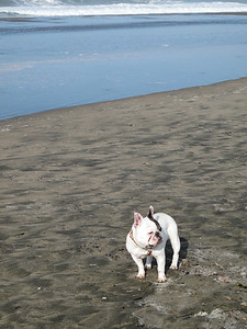 Blacken, Ocean Beach, San Francisco, November 2008