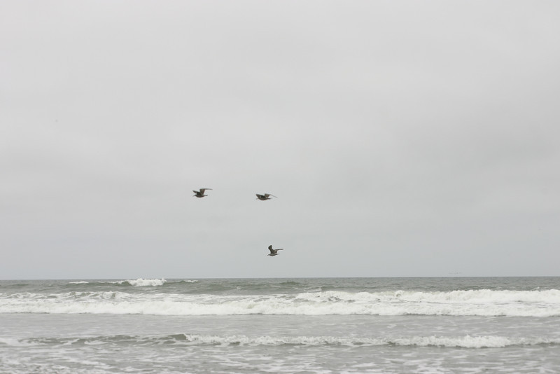 Gulls, Ocean Beach, San Francisco, June 2008