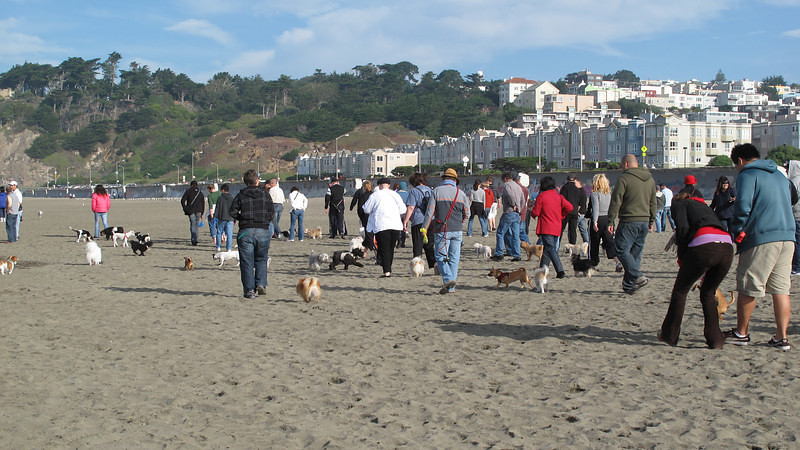 Small Dog Walk, Ocean Beach, San Francisco, November 2008