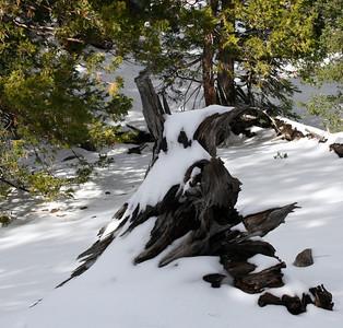 San Jacinto Mountains, Deer Springs Trail 27 Nov 2010
