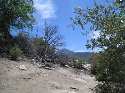 Deer Springs Trail, Idyllwild, CA, 23 Jun 2007