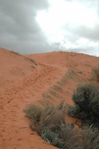 Coral Dunes 8