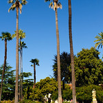 Palms around the Mission Santa Clara at Santa Clara University