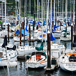 Santa Cruz Yacht Club and Harbor.  Sailboats along the docks at the Santa Cruz Yacht Club