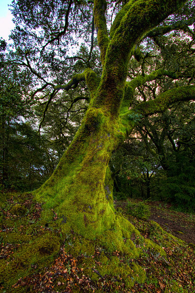 Mossy Oak 2
