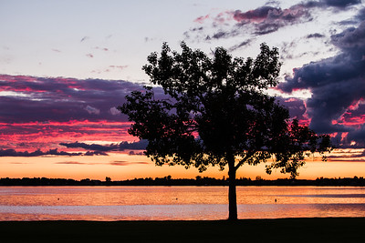 A lonely tree at Jackfish lake watching over the sunset
